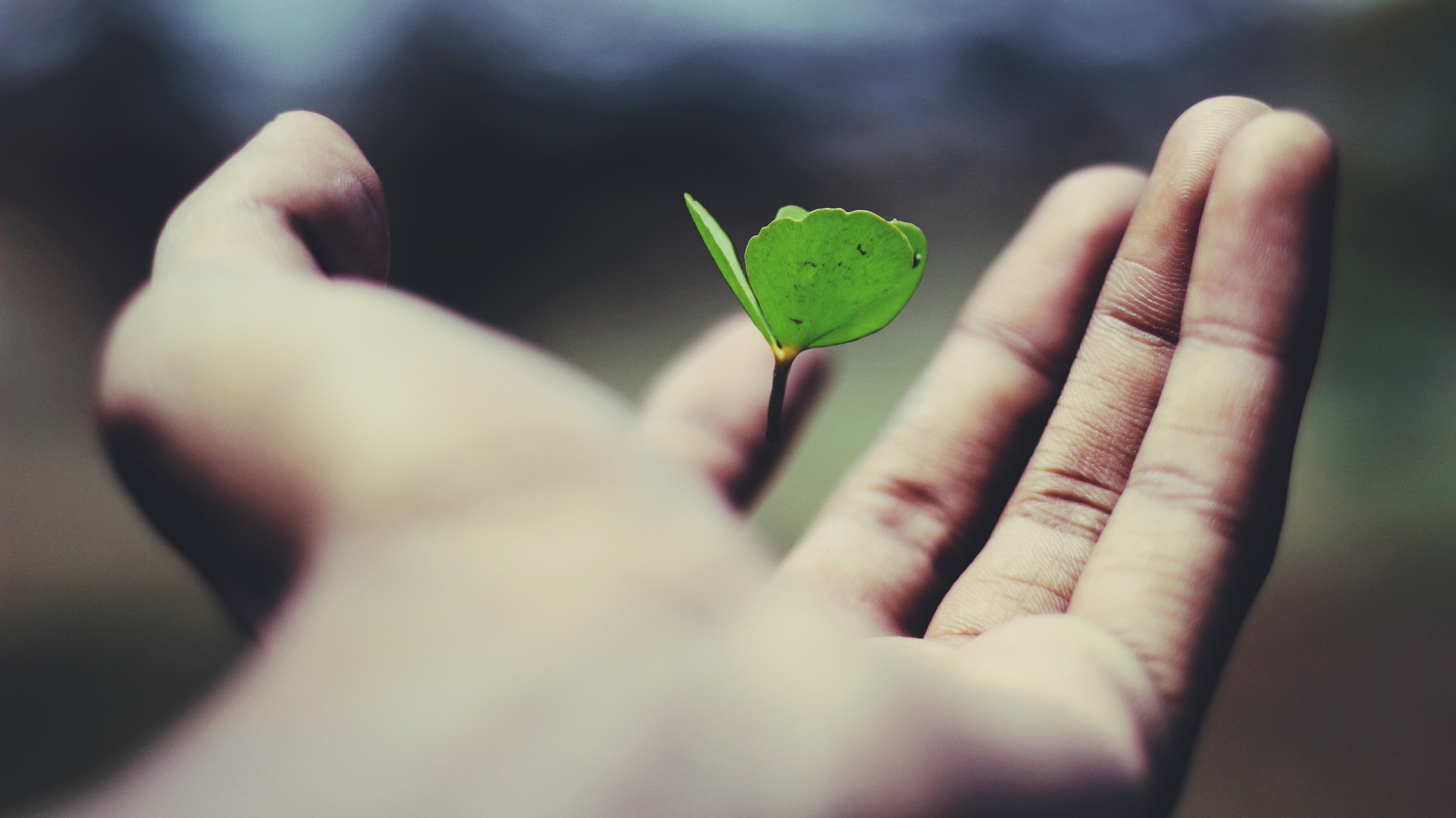 whole person health hand with leaf growing